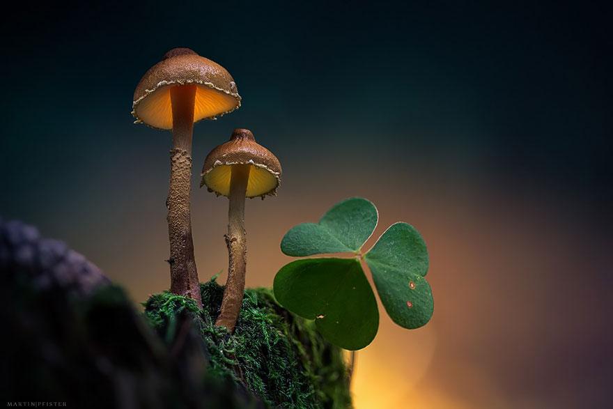 mushrooms-martin-pfister-8
