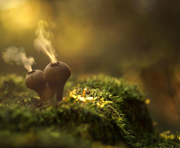 Glowing Mushrooms Come To Life In A Fairytale World By Martin Pfister