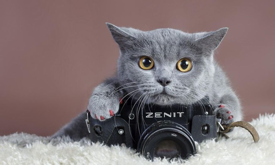 Kitty Likes Taking Photos