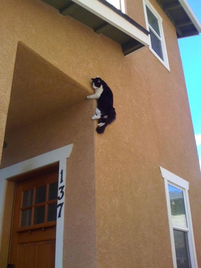 30 Ninja Cats That Have Mastered The Ancient Art Of Ninjutsu