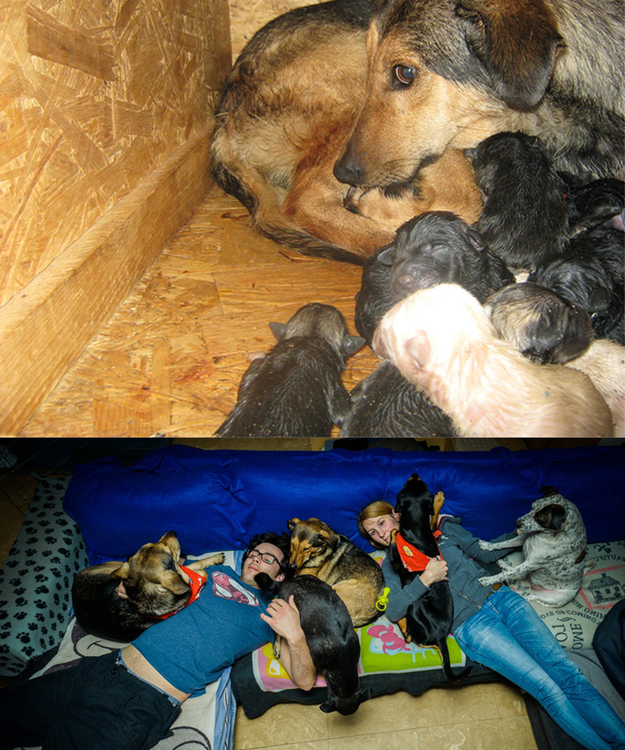 1.death Camp Shelter In Romania With Newborn Pups 2.in A Loving Family In Belgium With Her Son