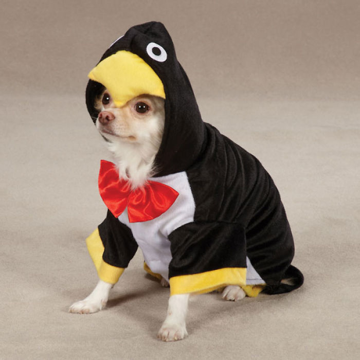 14 Images Of Dogs In Costumes
