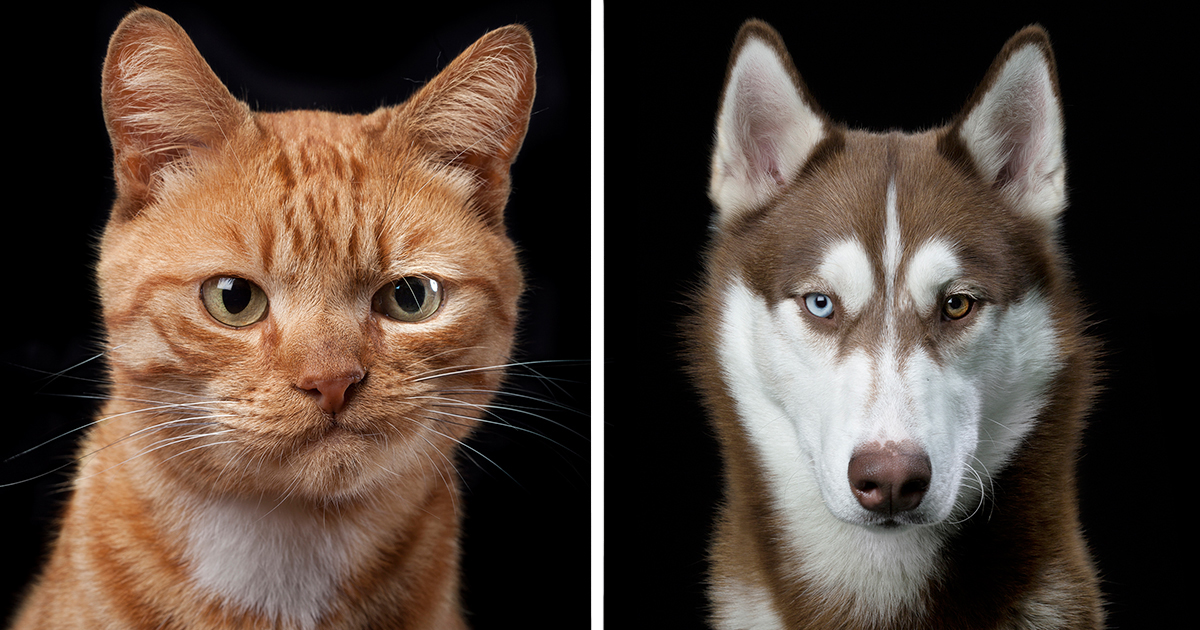 Dogs And Cats Don