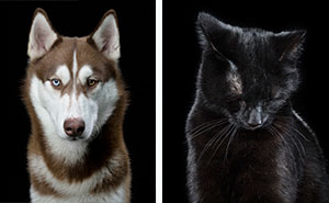 I Take Personal Close-Ups Of Dogs, Cats And Horses