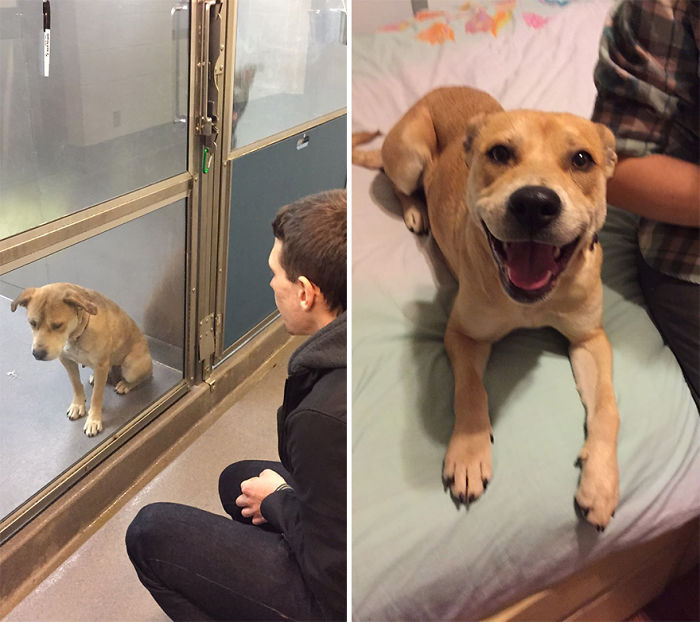 16+ Before & After Pics Show The Difference A Day Of Adoption Can Make To A Shelter Pet