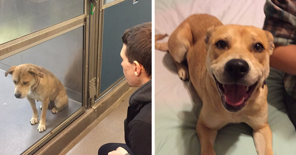 309 Before & After Pics Show The Difference A Day Of Adoption Can Make To A Shelter Pet