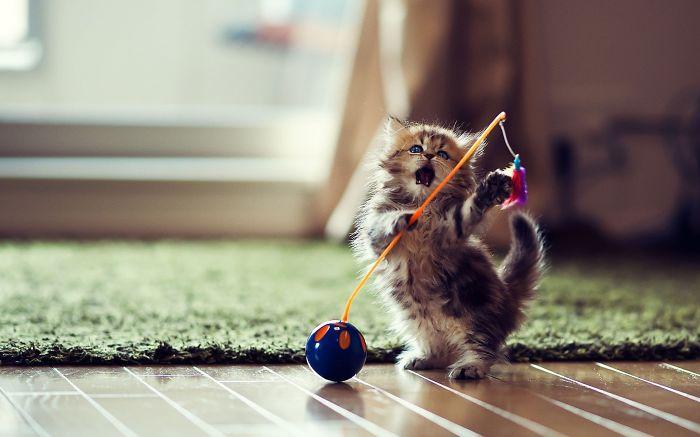 Little Ninja Playing