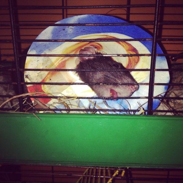Sacred Rat