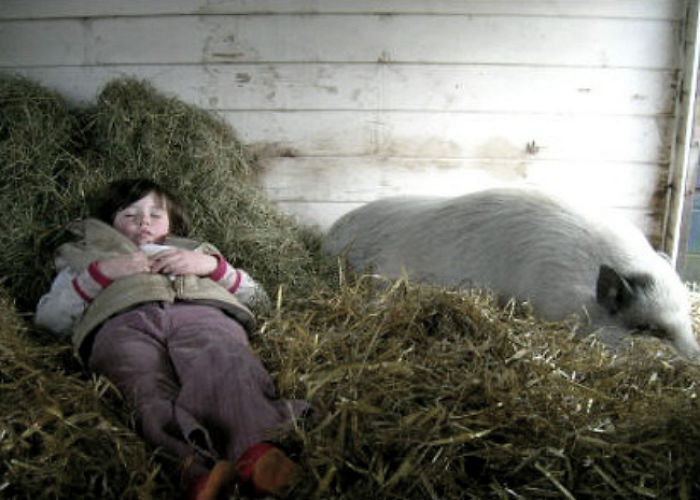 Sleeping Like A Pink Pig…