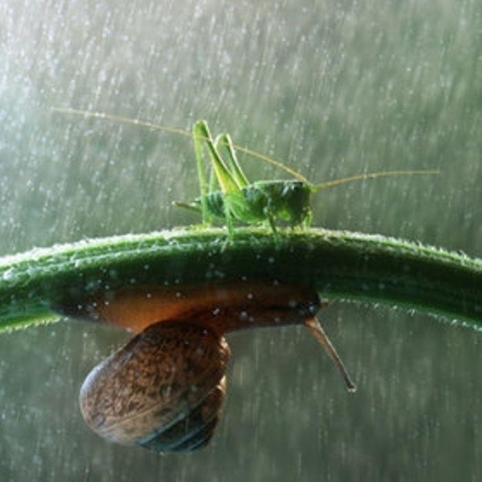 Photographer Vadim Trunov's Journey Through The Secret Life Of Snails
