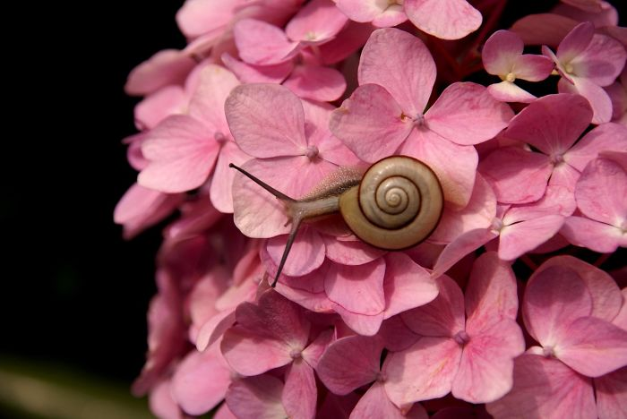 Snail And Pink Flowers