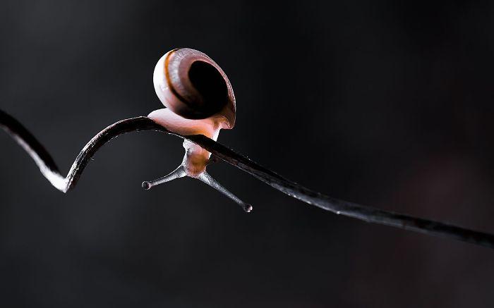 Playful Snail