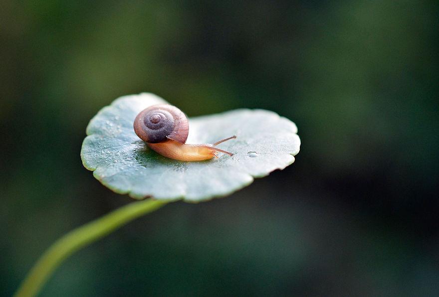 Snail Walk