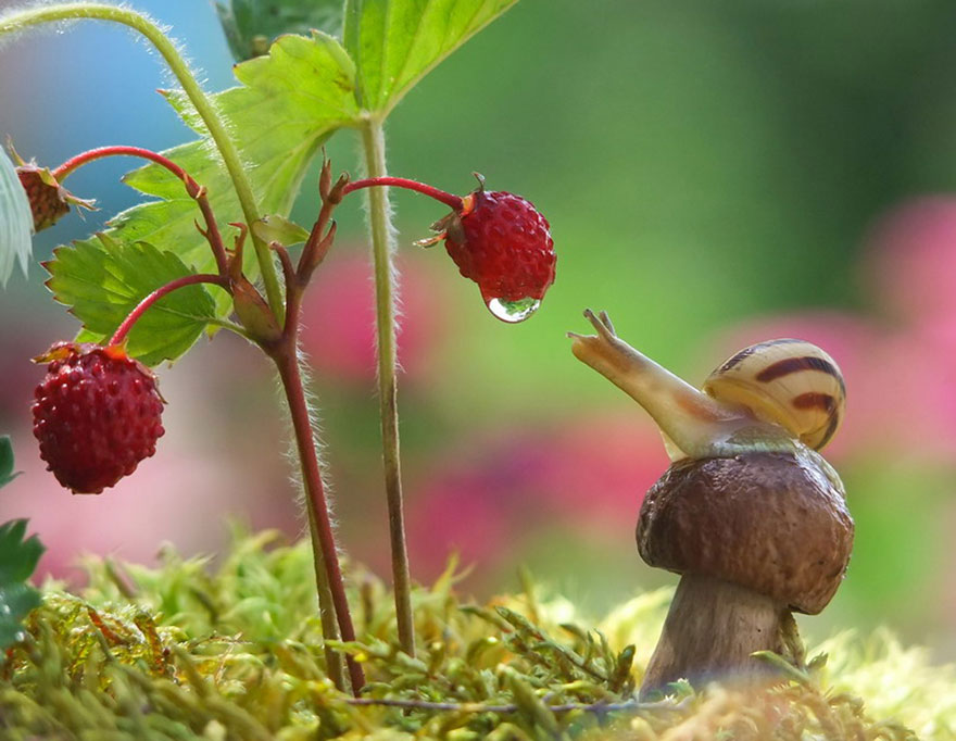 A Magical Miniature World Of Snails
