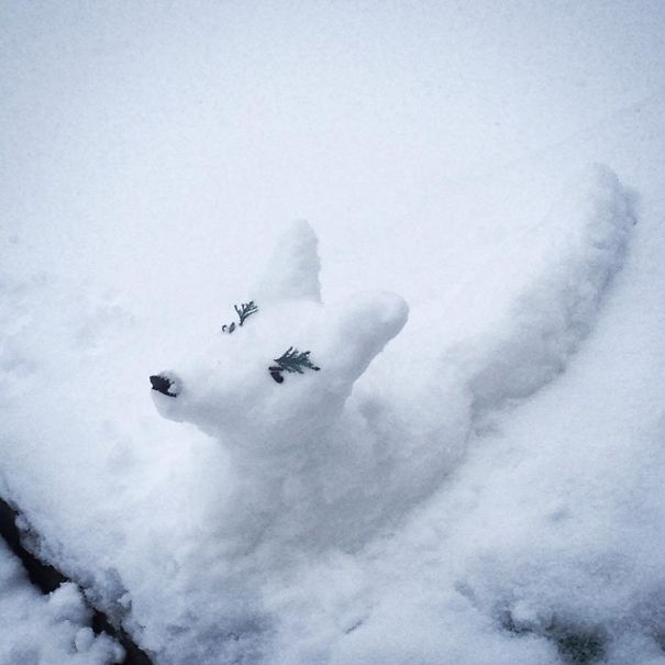Arctic Snowfox