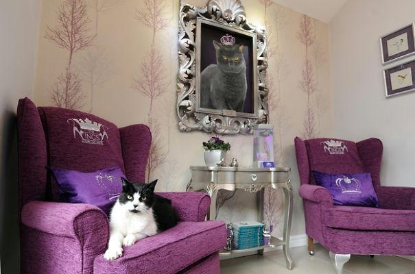 Luxury Hotel Room For Cat