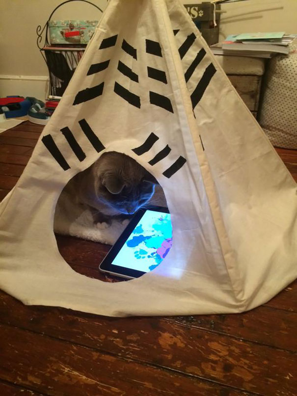 Cat Playing With His iPad