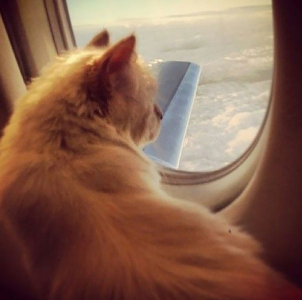 Choupette On A Private Jet Plane