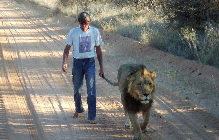 tame-pet-lion-zion-frikkie-von-solms-3