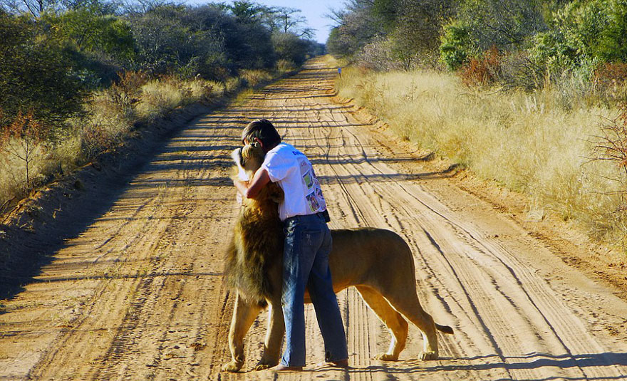 tame-pet-lion-zion-frikkie-von-solms-4