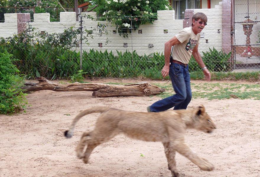 tame-pet-lion-zion-frikkie-von-solms-6