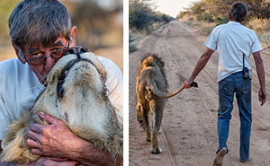 11 Years Of Friendship Between A Lion And The Human That Saved Him