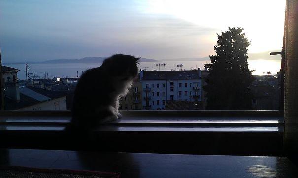 Tito Enjoying A Sea View