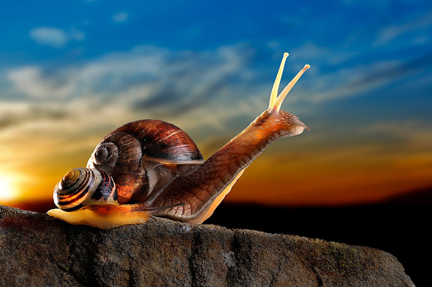 Snails At Sunset