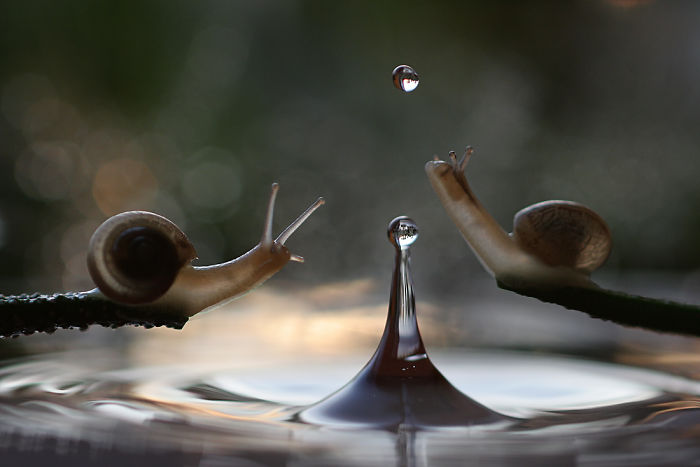 Vadim Trunov Takes Stunning Pictures Of Snails And Insects