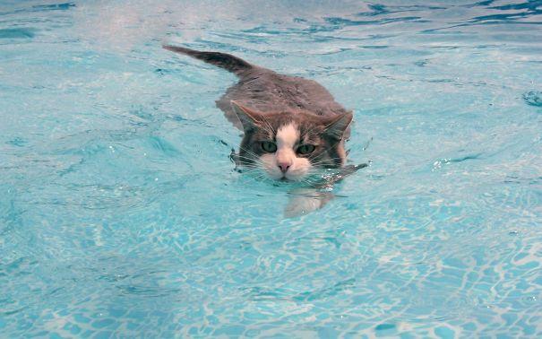 νερό μπάνιο Γάτα