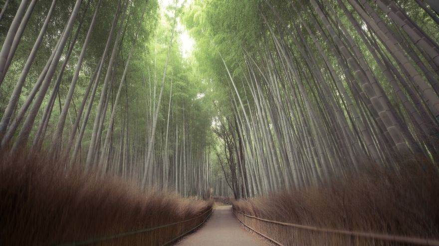 Arashiyama : Japan