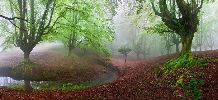 """the Forest Maravillador"" Otzarreta, Vasque Country, Spain"