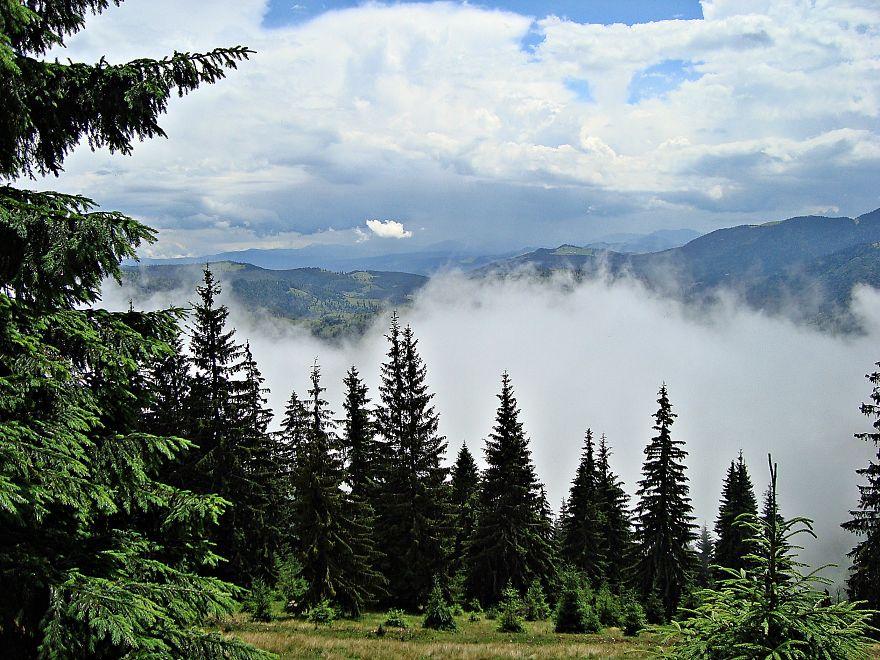 Misty Forest, Rodnei Mountains, Romania