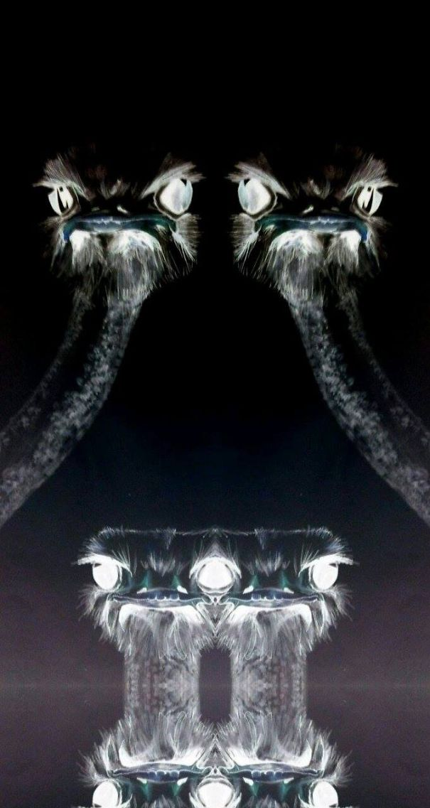 Two ostriches mirror effect bored panda for Double mirror effect
