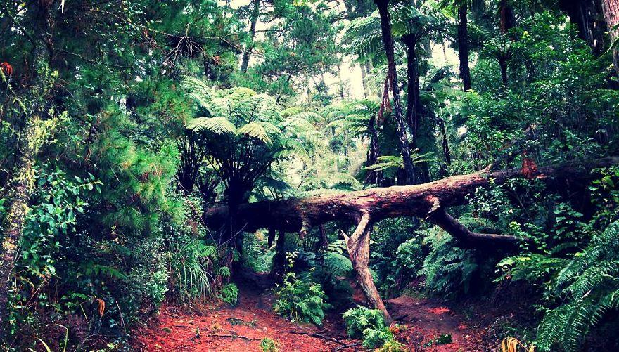 Redwood Forest Rotorua Nzl