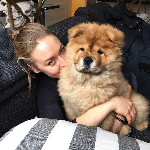 Koko - Chow Chow Puppy.