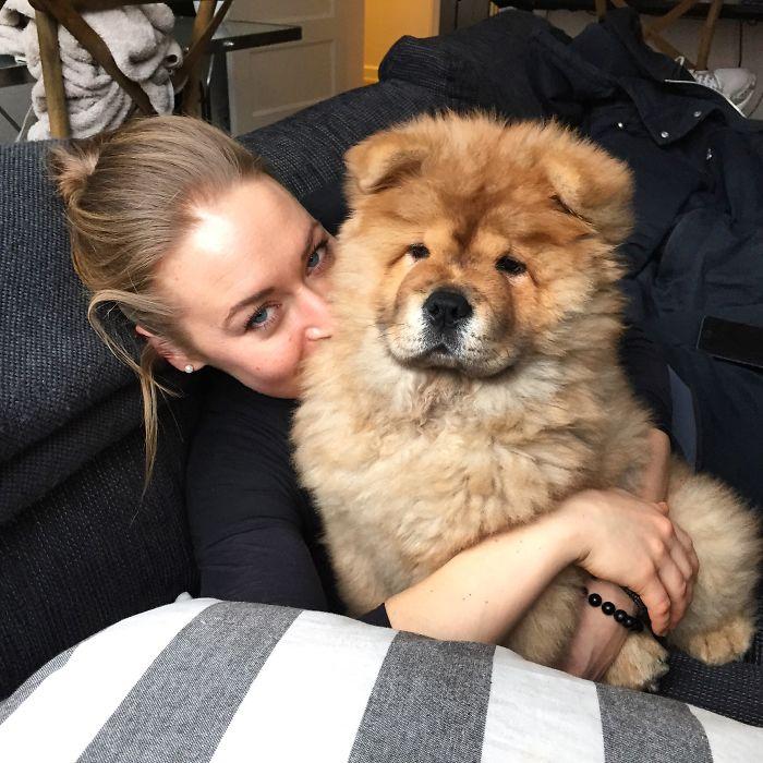 Koko – Chow Chow Puppy.
