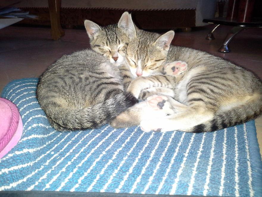 Cori And Bantam Sisterly Love