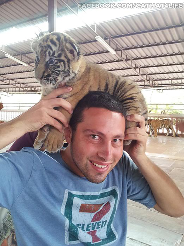 Tiger Hat!