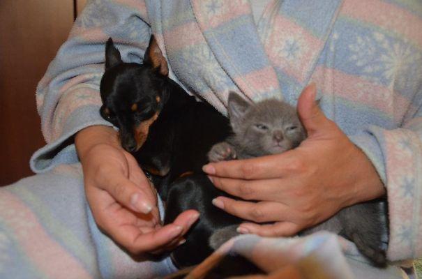 Cleo And Sinatra = )