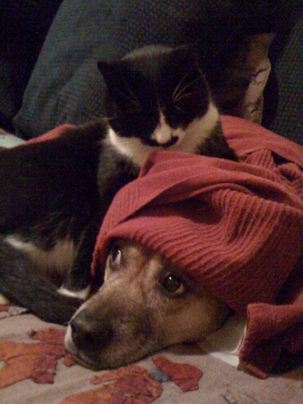 Chico & Daisy