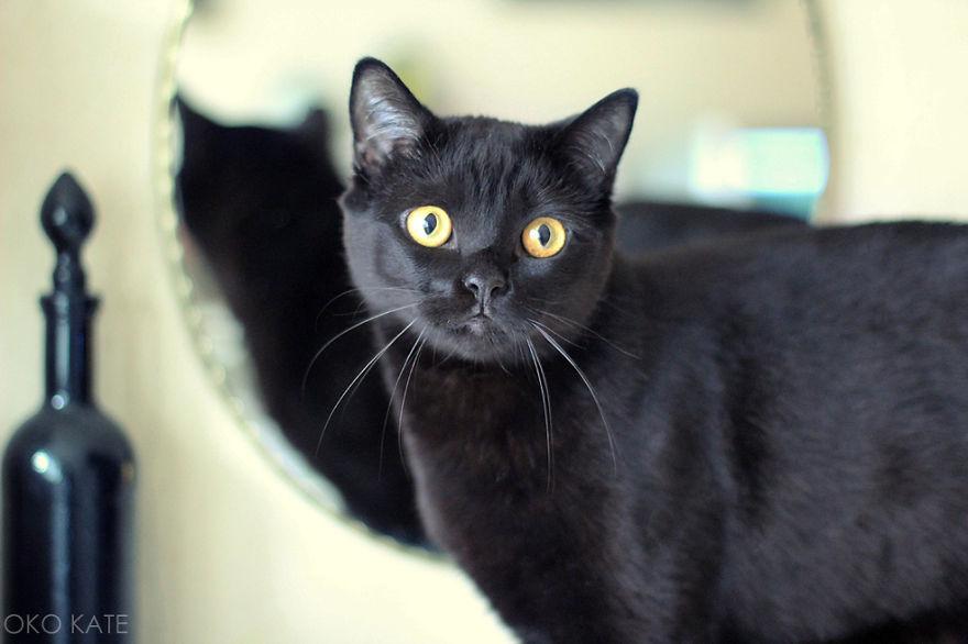 I Photograph My Cats Looking At Mirrors