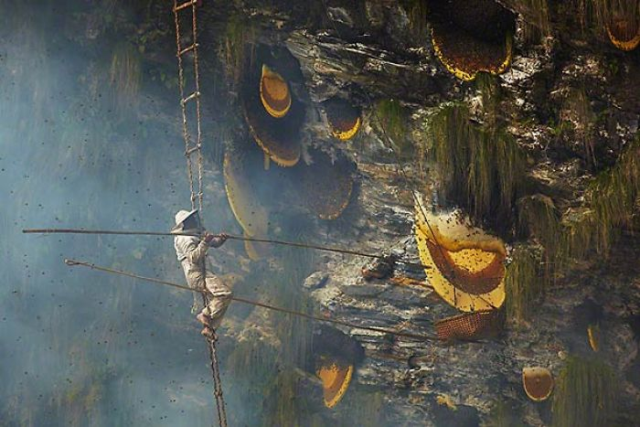 Honey Hunters In Nepal
