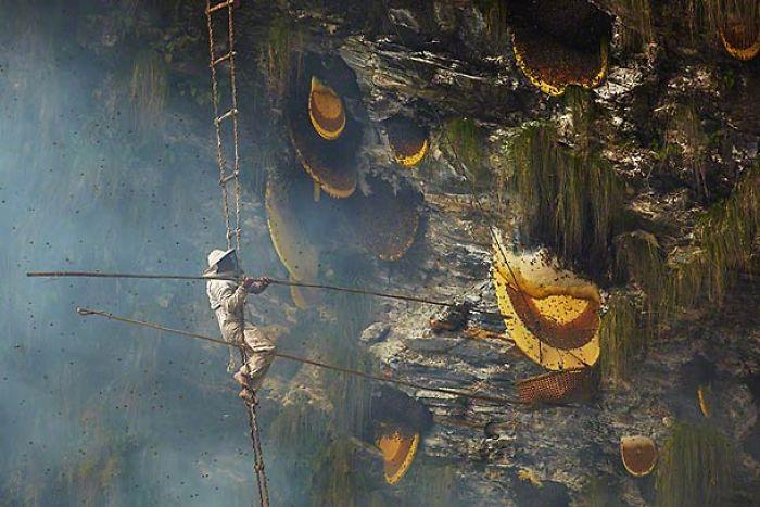 Honey Hunters In Nepal