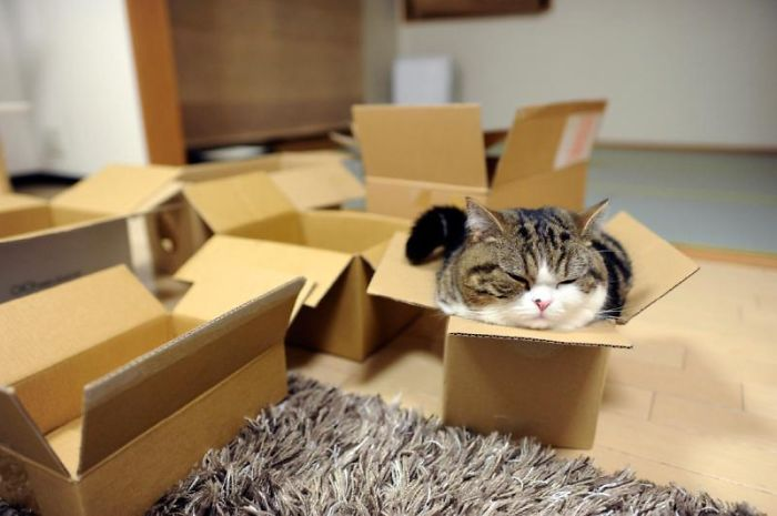 Cat's Cardboard Mystery Solved