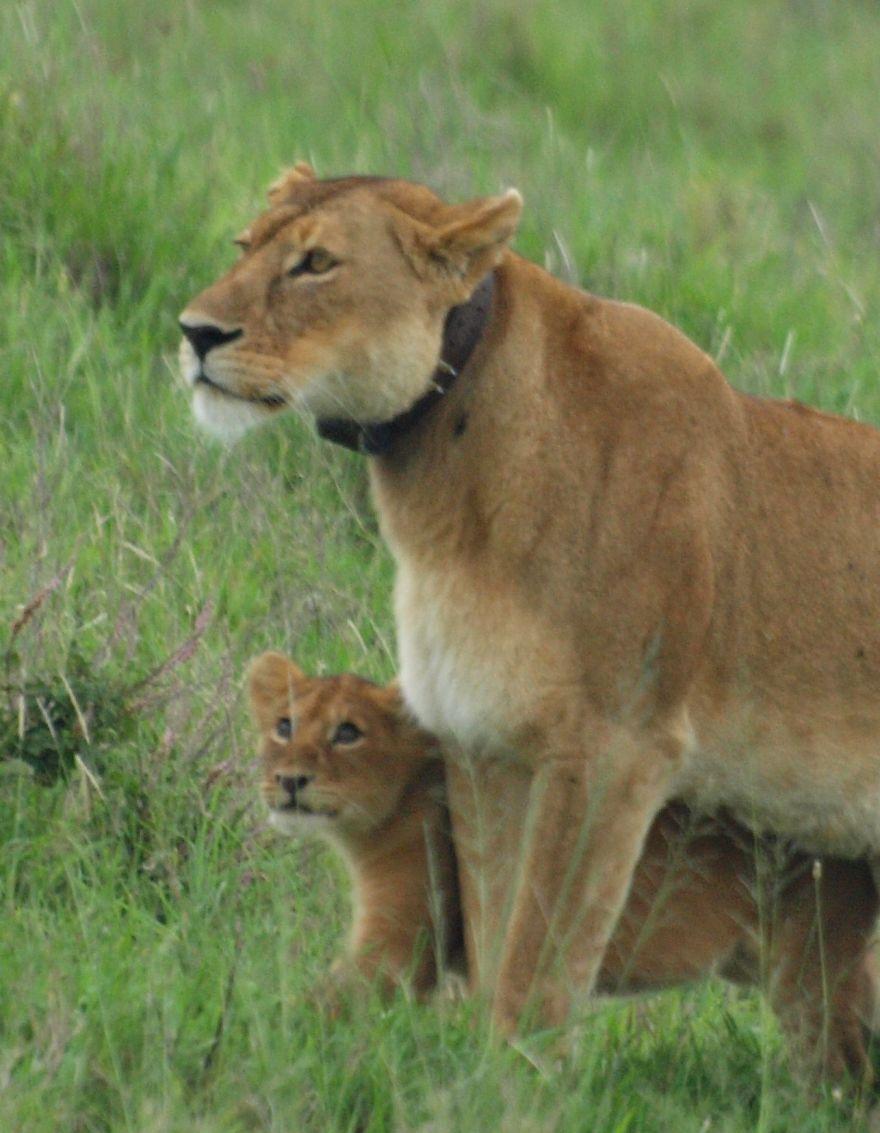 ♡ Mother 2 ♡ Serengeti