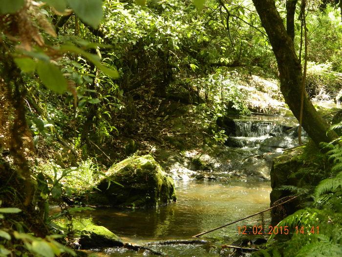 Tarra Bulga Rain Forest.victoria. Australia