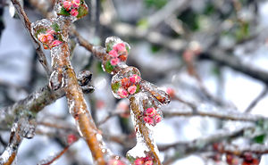 Ice Storm In Nashville Creates A Winter Wonderland Showcasing Winter And Spring