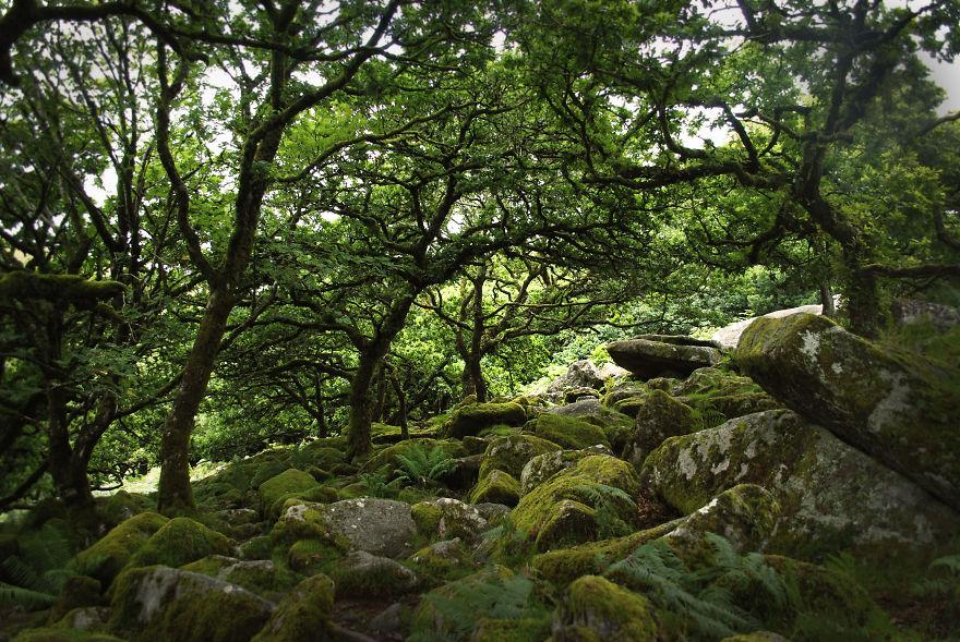 Dartmoor National Park, Devon, England.