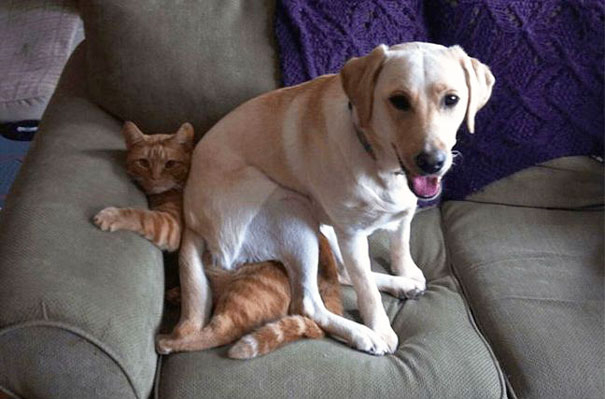 When My Dog Decided To Sit On My Cat